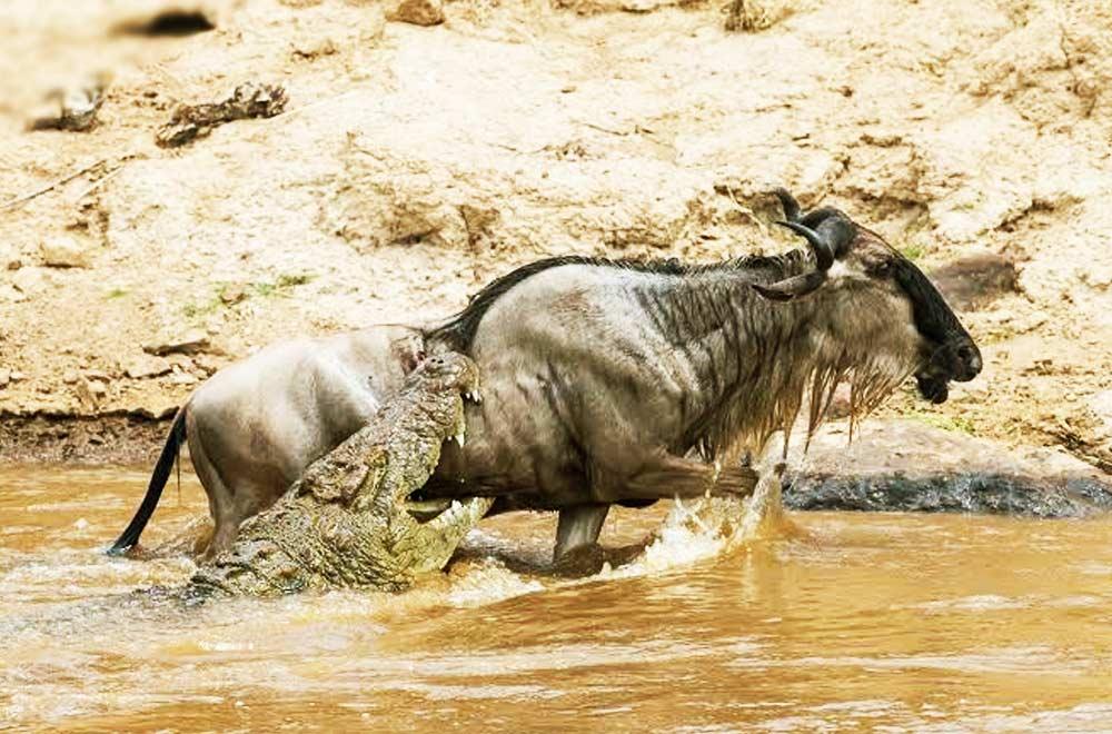 Tanzania Budget Camping Safari