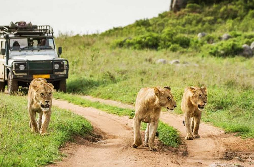 Serengeti Adventure Safari