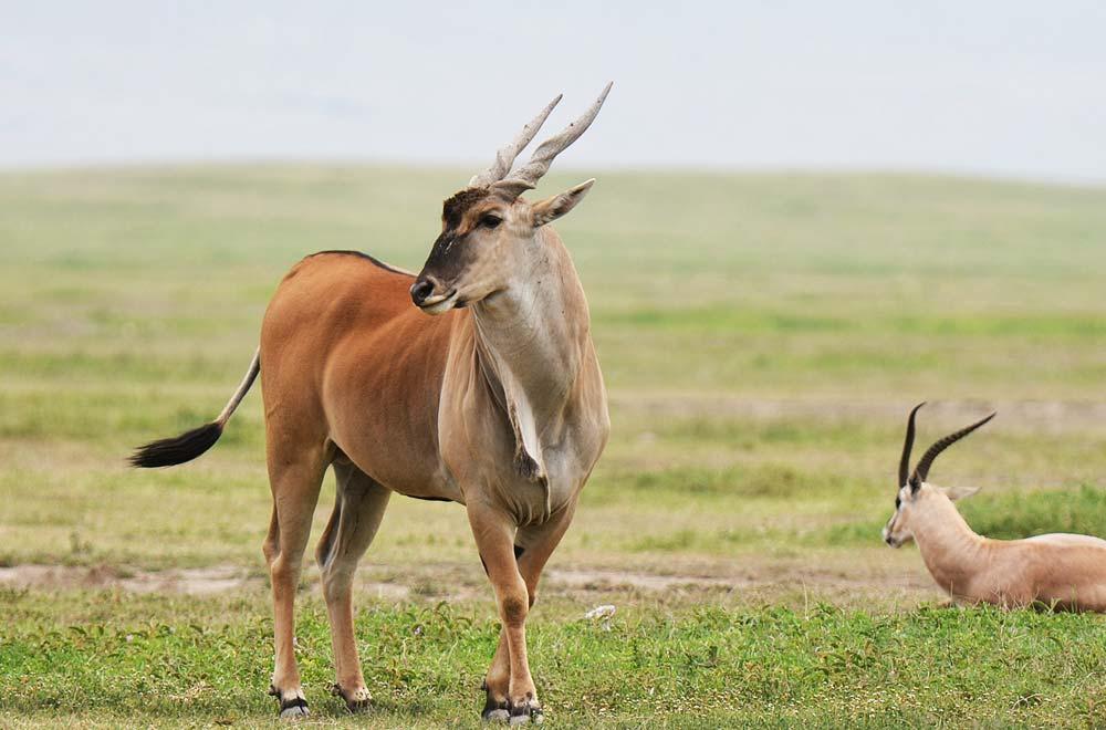 Northern Tanzania Adeventure Safari