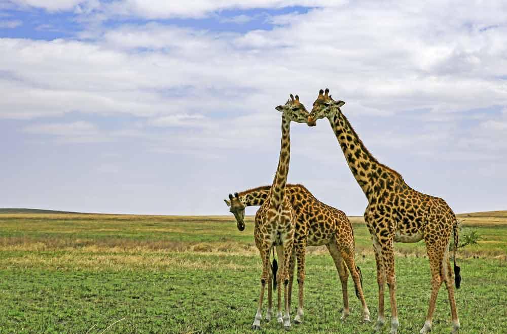 Northern Tanzania Expedition