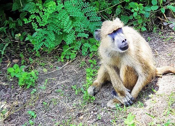 Udzungwa Mountain National Park