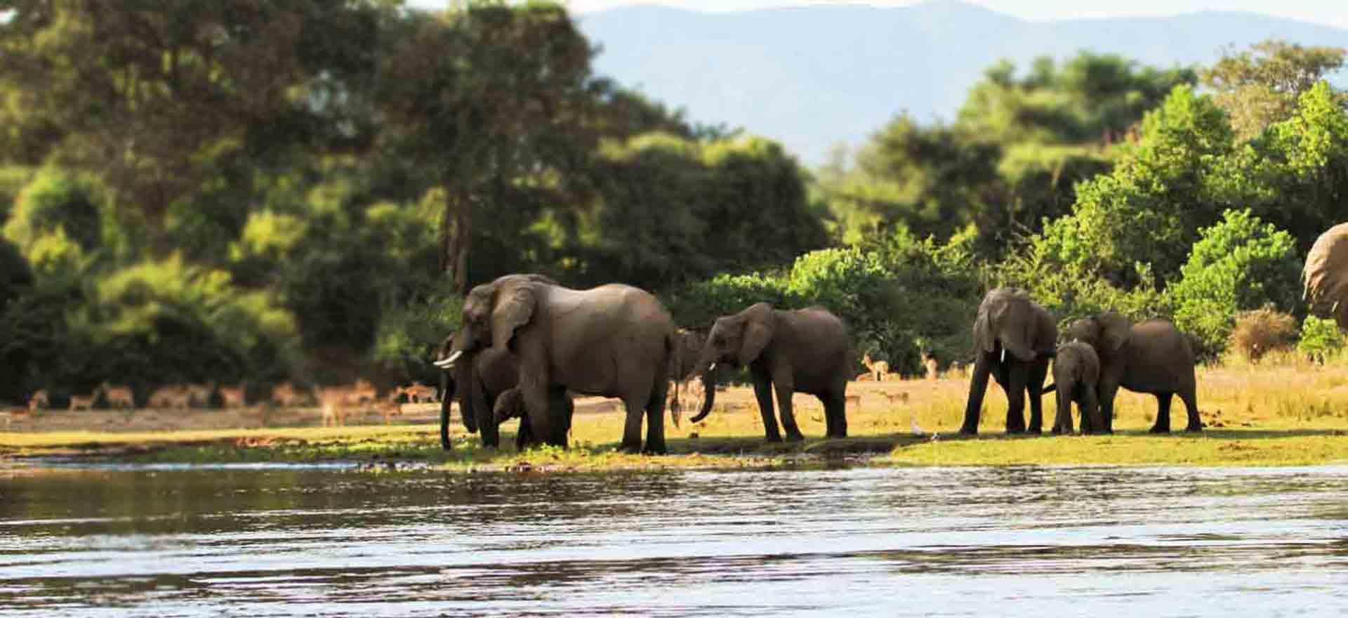Wapo Africa Safaris