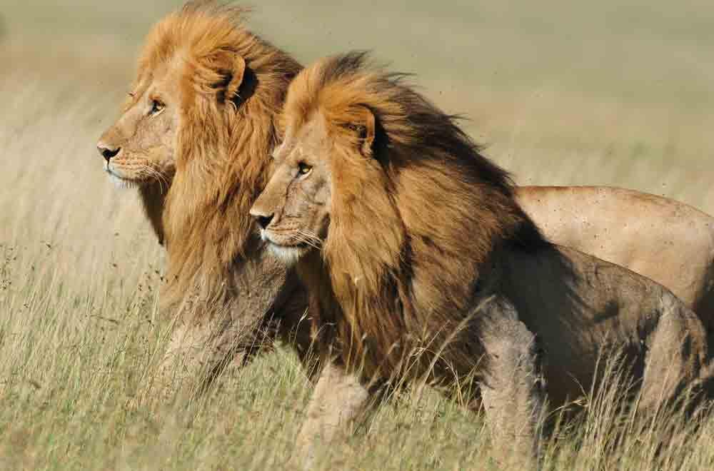 Wanders of Ngorongoro Crater& Serengeti
