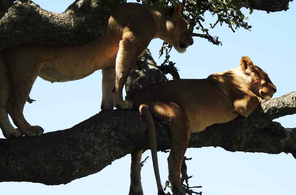 Best of Wapo Safari