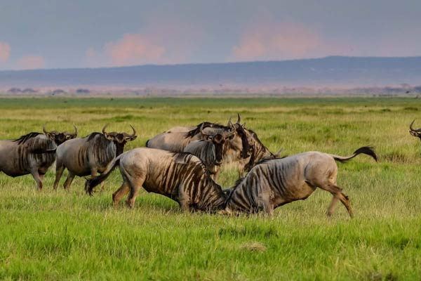 Southern Serengeti Great Wildebeest Migration Safari