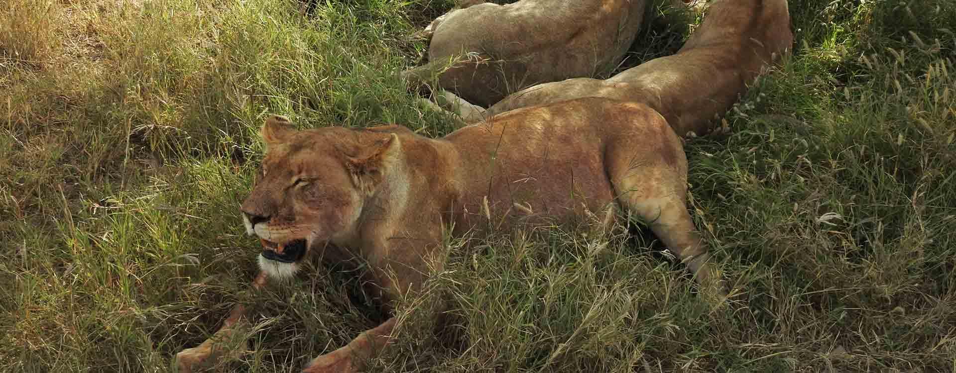 Best of Tanzania Safari & Beach