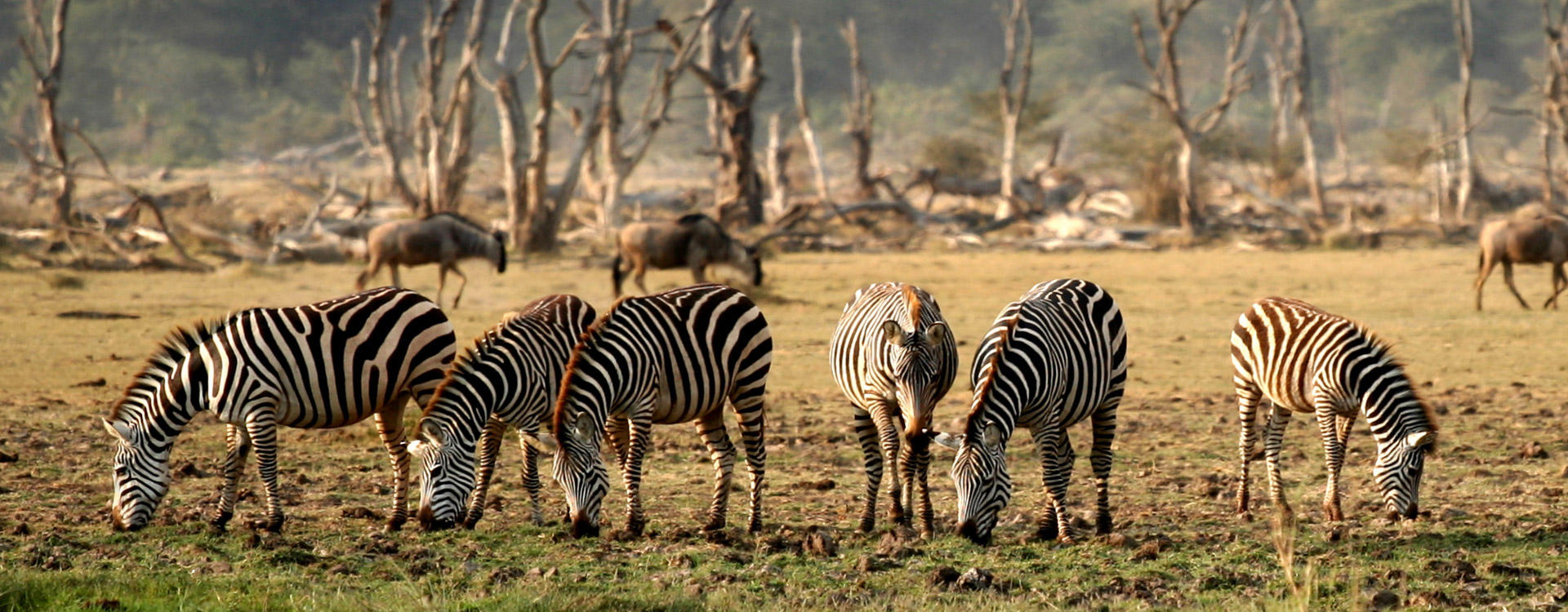 Tanzania Day Trip