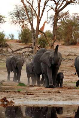 >Arusha National Park